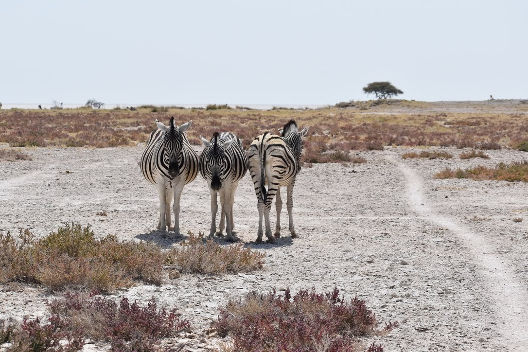 Namibia, Self Drive Safari – Part 3, Week One