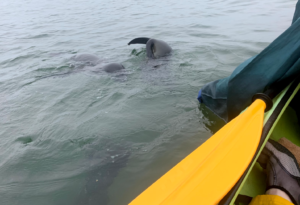 Go kayaking with seals! Its a must!